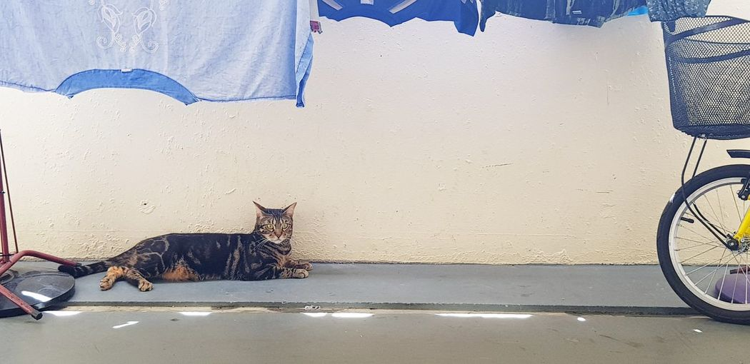 cat chilling under laundry Blue Neighbourhood Cat Neighbourhood Laundry Line Pets Feline Domestic Cat Portrait Cat Family Tabby Cat Whisker Yellow Eyes EyeEmNewHere