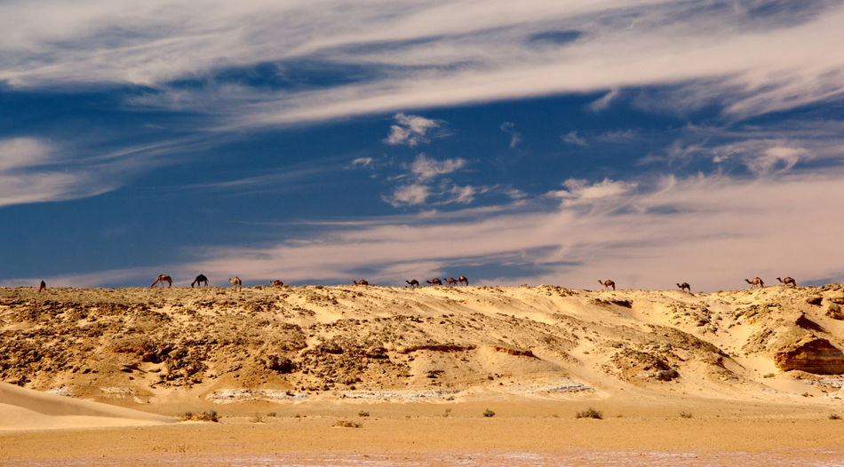 Beauty In Nature Camel Desert Landscape Outdoors Sand Sky