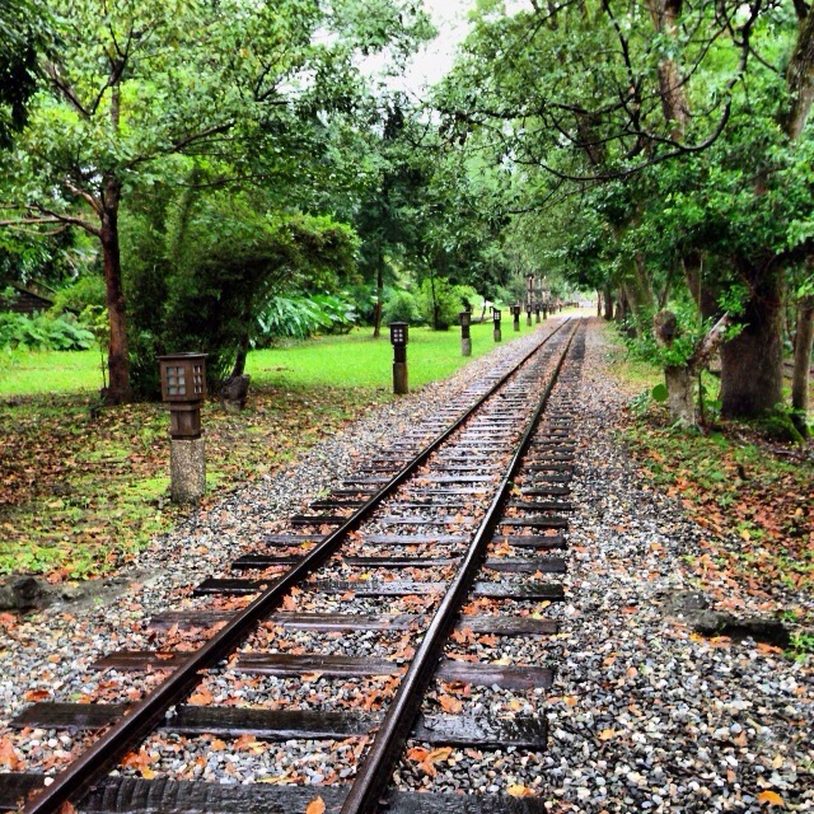 railroad track, tree, rail transportation, the way forward, transportation, diminishing perspective, vanishing point, forest, public transportation, railway track, growth, straight, day, nature, tranquility, no people, outdoors, long, travel, green color