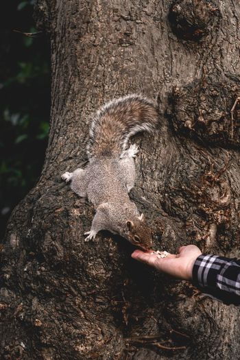 Hungry Spring Feeding  Feeding Animals Squirrel Mammal Eating Real People Human Body Part One Person Lifestyles Human Hand Hand Day Leisure Activity Body Part Unrecognizable Person Tree Nature Land Tree Trunk Trunk Outdoors Close-up Human Limb