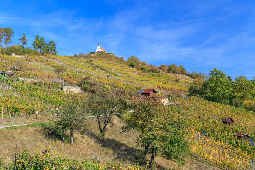 Die Wurmlinger Kapelle mit Weinbergen Tübingen Weinberg Wurmlinger Kapelle Beauty In Nature Built Structure Day Environment Green Color Growth Landscape Nature Non-urban Scene Outdoors Plant Rottenburg Scenics - Nature Sky Tranquil Scene Tranquility Tree Wurmlingen
