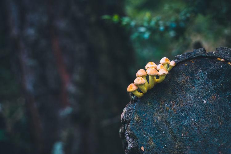 Close-up of bananas on rock