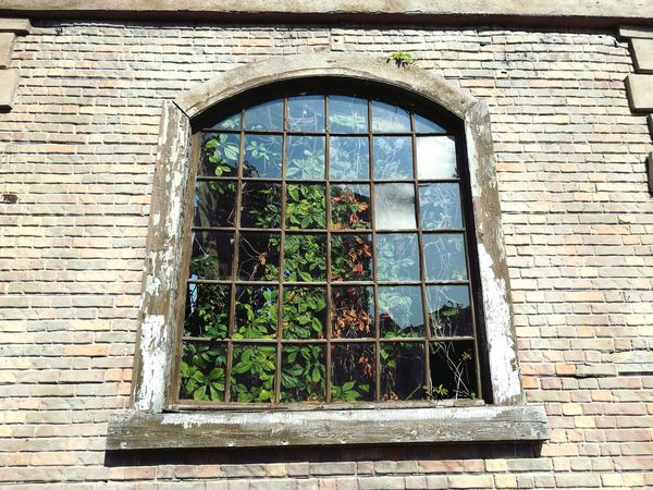 Window Day Plant No People Built Structure Growth Nature Building Exterior Architecture Outdoors Close-up
