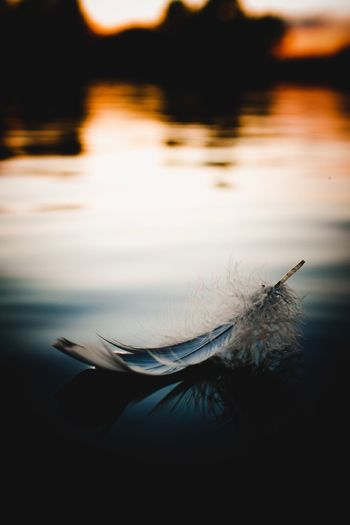 Plume || Water Reflection Nature One Animal No People Lake Animals In The Wild Outdoors Close-up Animal Themes Beauty In Nature Day Fragility Feather  Feathers