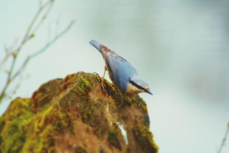 Im Wald Vogel