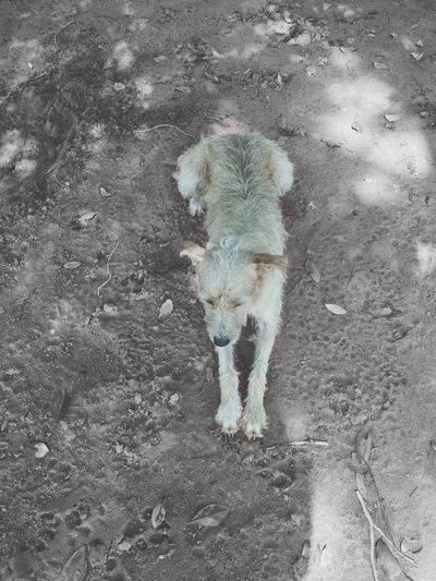 High angle view of dog on sand