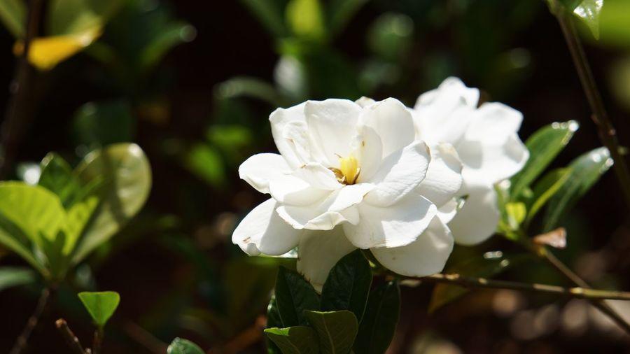 Flower Flowering Plant Plant Beauty In Nature White Color Freshness Flower Head