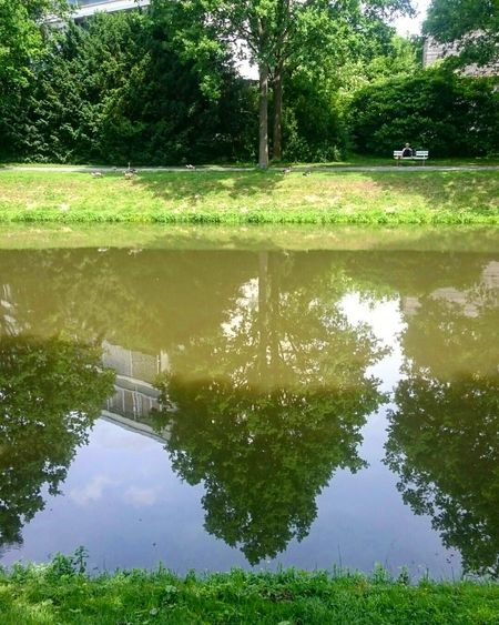 Reflection Water Tree Lake Outdoors Nature Standing Water Day Green Color Beauty In Nature No People Tranquility Park - Man Made Space Reflecting Pool Puddle Scenics Grass Flood Sky Kassel Auepark