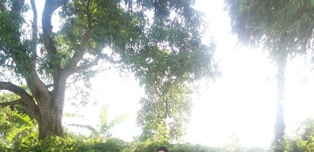 Old tree is stands for many years Mango Tree Old Tree Attractive Tree Beauty In Nature Big Tree Branch Day Forest Green Color Growth Leaf Lighty Forest Low Angle View Nature No People Outdoors Scenics Sky Sunlight Tranquil Scene Tranquility Tree Tree Trunk