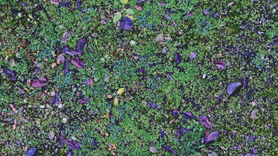 High angle view of purple flowering plants on land