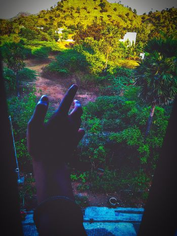 Green Outdoors Dramatic Daylight Human Hand Close-up Green Color Greenery
