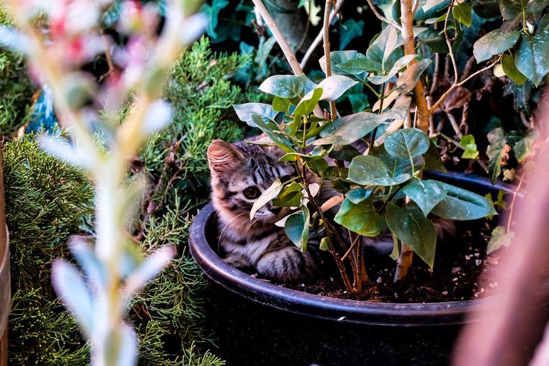Cat by plants