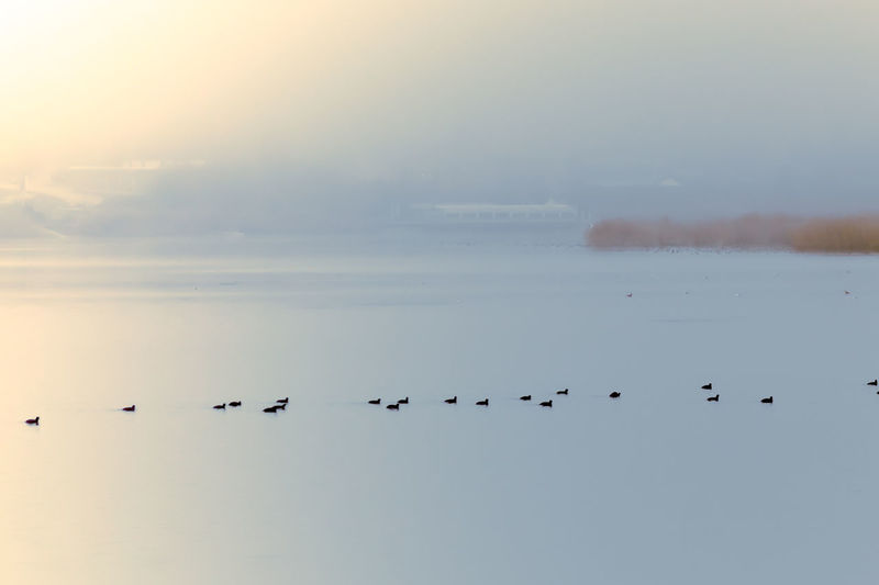 Silence Moment Silence Minimlism Abstract Large Group Of Animals Animals In The Wild Flock Of Birds Beauty In Nature Nature No People Fog Day Water Landscape Scenics Outdoors First Eyeem Photo