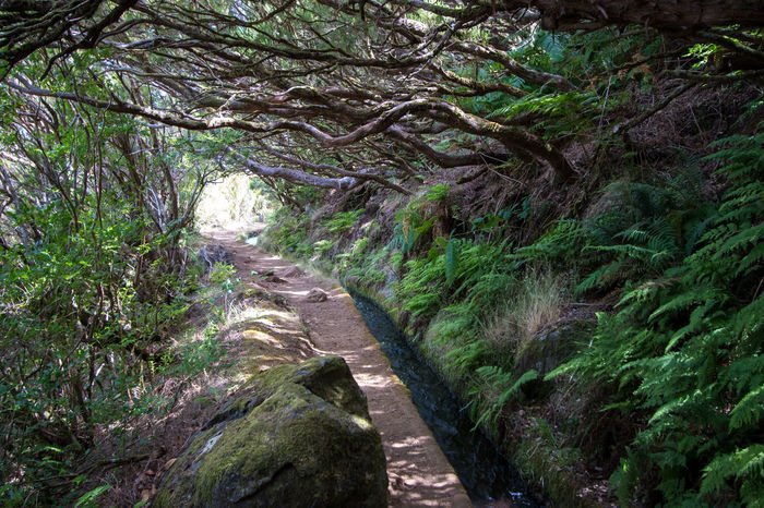 Landscape Levada Da Ribeira Grande Levada Walk Madeira Island Nature No People Outdoors Portugal Water Transport System Forest Ferns Irrigation Channel Lush Forest Foliage