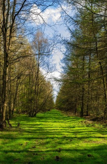 Wooded path.
