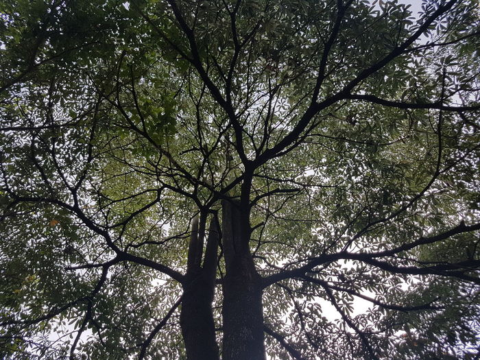 Tree Low Angle View Branch Nature Growth Day Silhouette Outdoors Beauty In Nature No People Tree Trunk EyeEmNewHere