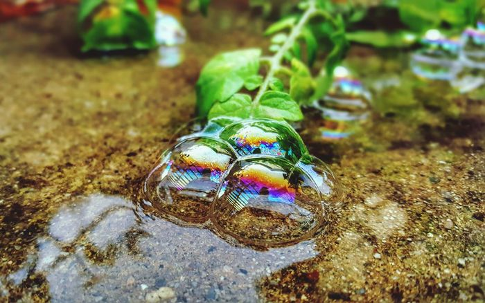 Bubbles Refraction Multi Colored Freshness Water Beauty In Nature Illuminated Vibrant Colors Leaf Nature Green Color After The Rain Growth Playing With Light Bokeh Photography No People Day Creative Use Of Light Rainbow Cwpearcygerman