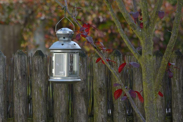 Autumn Leafs Building Exterior Close-up Lantern Red Virgina Creeper Wood - Material