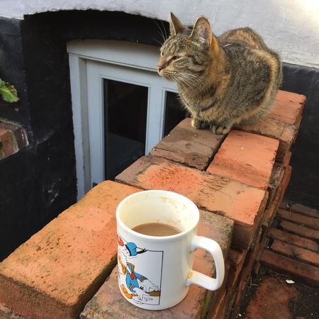 Coffee At Home Catportrait Cat Lunathecat Coffee UrbanCat Urban Lifestyle Aarhus, Denmark Friend
