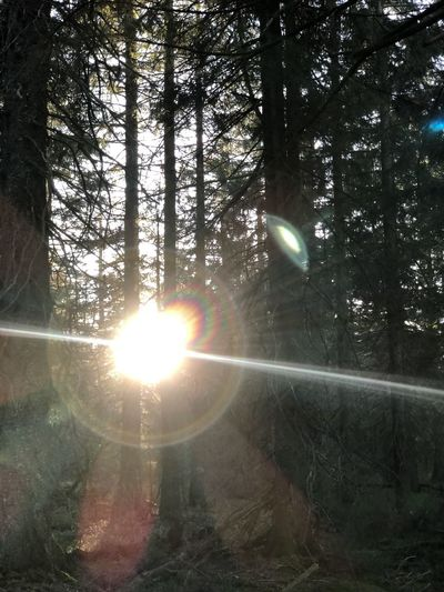 Sunlight streaming through trees in forest on sunny day