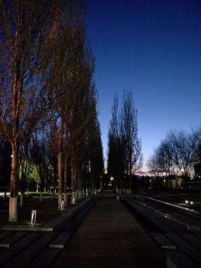 Tree City Blue Shadow Road Sky