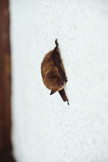 Bat Fledermaus Batman Animals In The Wild Animal Photography Animal_collection Animal Macro Nature