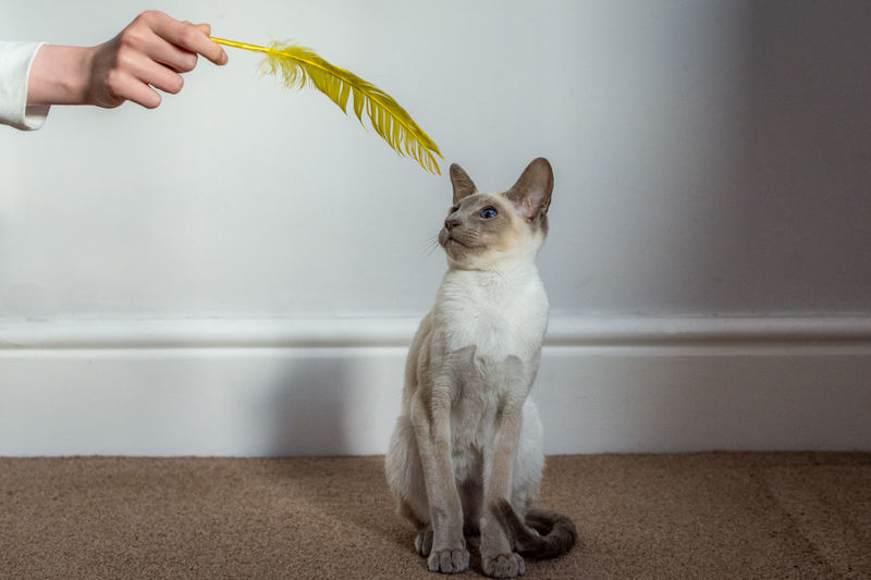 Hand holding cat against white wall