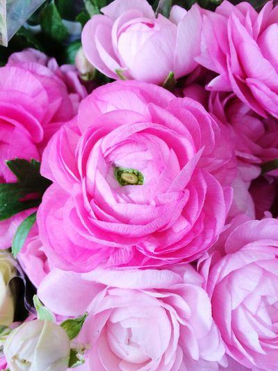 Winter Flowers EyeEm Nature Lover EyeEm Best Shots - Nature Loving Flowers Flower Collection Flowers