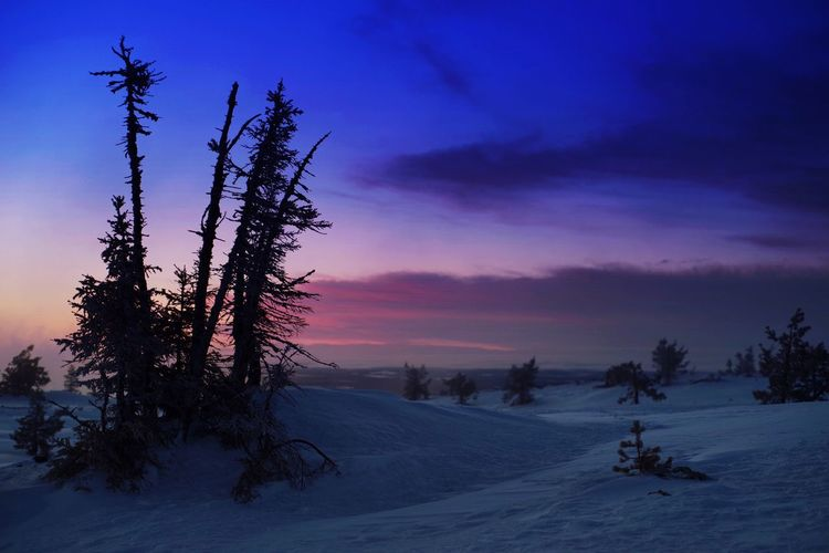 Winter fairytale. Nature Beauty In Nature Winter Sky Tranquil Scene Scenics Fairytale  Fairytales & Dreams Landscape Tranquility Sunset Snow Silhouette Light And Shadow Exceptional Photographs EyeEm Best Shots Levi Magic Arctic Scenery Cold Temperature Tree Trees Mountain PENTAX K-1