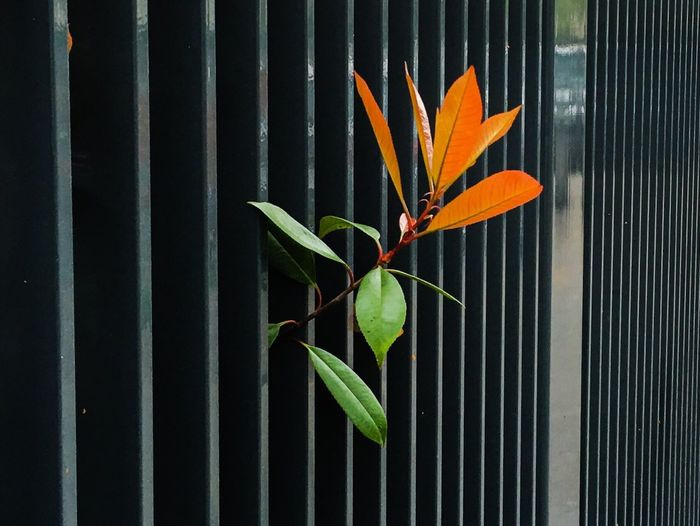 Plant Growing Amidst Fence