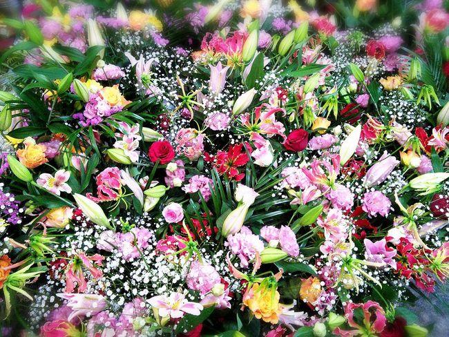 Flower Flower Flowers Cute♡ Flowerporn Beautiful