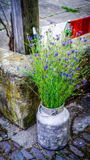 Flowers Bucket Decoration Flower Collection Flowers Flowers,Plants & Garden Garden Photography Growth Outdoors Outside Purple Water