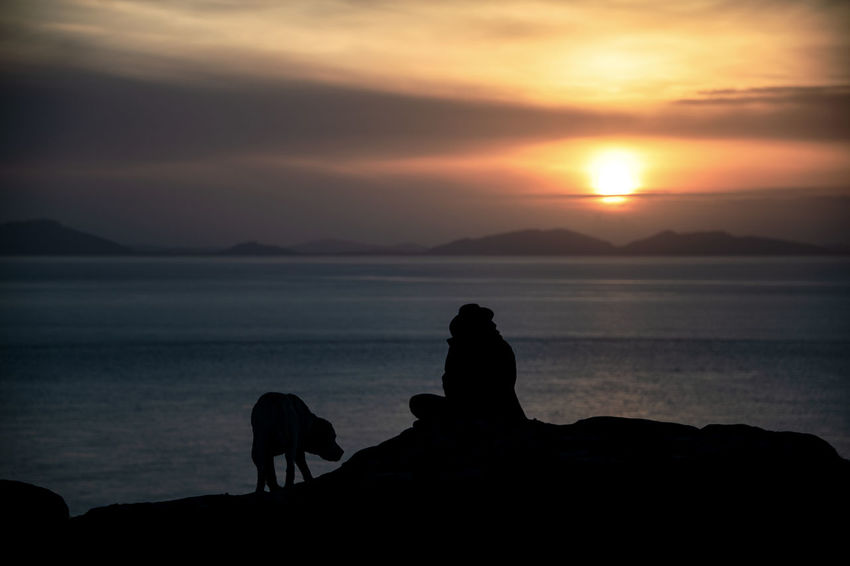 Silhouette Watching The Sunset Dog Horizon Horizon Over Water One Person Peaceful Real People Scenics - Nature Sea Sky Sunset Water