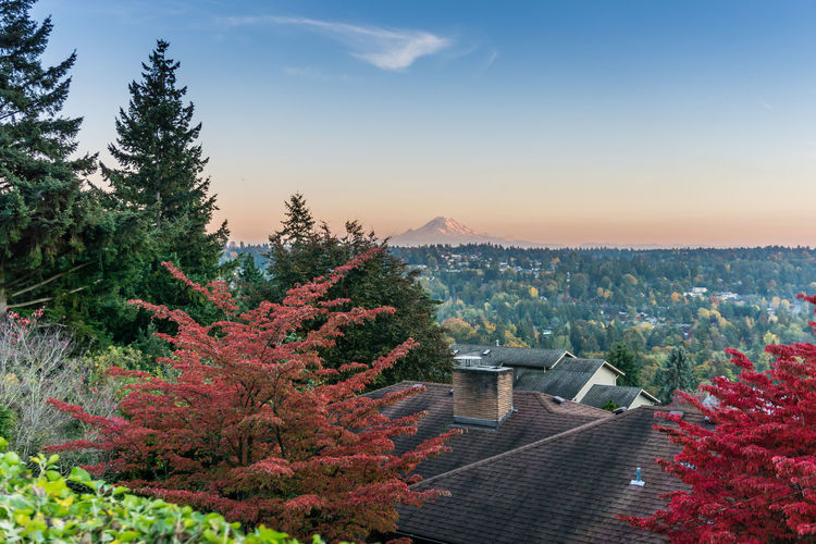 Red autumn leaves enhance the view of Mount Rainier. Architecture Tree Built Structure Sky Plant Building Exterior Nature No People Autumn Beauty In Nature Roof Scenics - Nature Building Mountain Growth Outdoors High Angle View Orange Color Tranquility Day Change Autumn Fall Red Mount Rainier