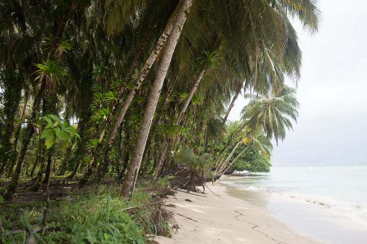 Palm trees on shore
