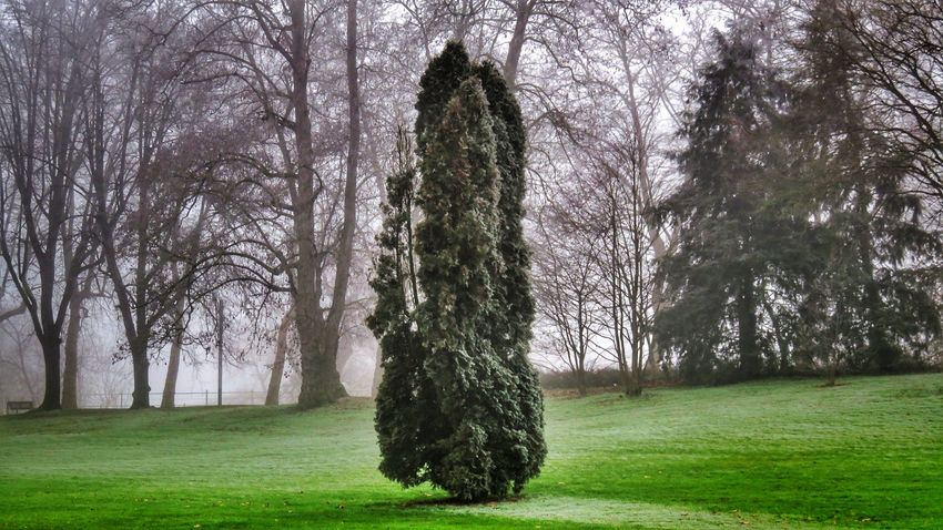Tree Grass Growth Nature Green Color Outdoors No People Day Sky Beautiful Allier Auvergne Canon Canonpowershot Cold Temperature Tranquility Winter Beauty In Nature Park Nature Parc Beautifulview Green Color Photography Tree