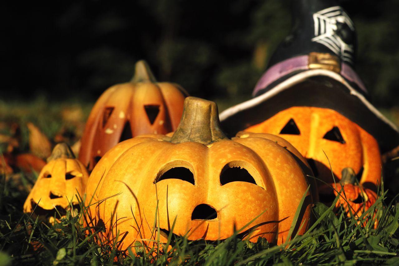 Halloween pumpkins on grassy field