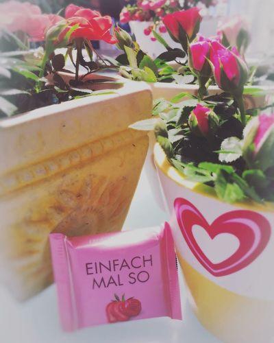 Herz Röschen Text Western Script Flower Flowering Plant Communication Freshness Close-up Pink Color Plant Positive Emotion Gift Nature No People Indoors  Emotion