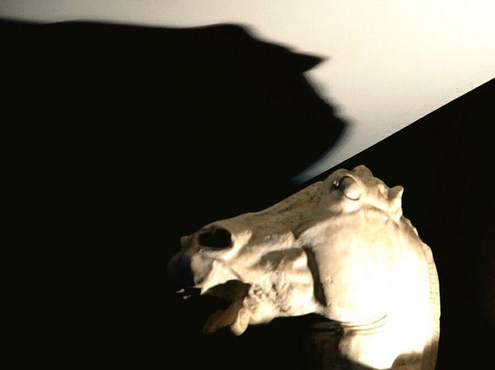 Horse Sculture Scultura Ombra E Luce Shadows Sagittarius Sagittario