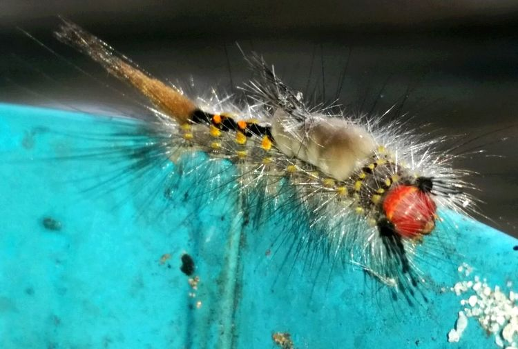 Insect Bugs Bugslife Caterpillars  Insectoftheday