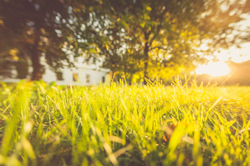Summer, grass, sunlight, bokeh, abstract landscape Abstract Photography Summertime Abstract Beauty In Nature Bright Close-up Grass Green Color Landscape Nature No People Outdoors Plant Scenics - Nature Selective Focus Sky Summer Sun Sunlight Yellow