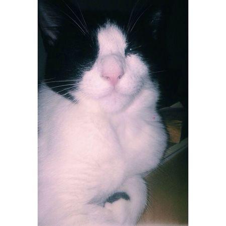 Baby finn ❤️ CA I Love My Cats