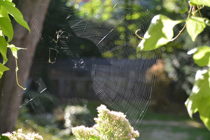 Animal Animal Themes Animals In The Wild Beauty In Nature Close-up Complexity Day Focus On Foreground Fragility Growth Leaf Nature No People One Animal Outdoors Plant Plant Part Spider Web Sunlight Tree Vulnerability  Web