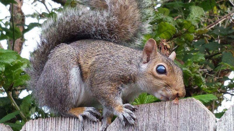 Mealtime Unique Animal Features Blue Eye Squirrel Wild Animal Friends Capturing Movement Nature Pets Corner Moments-2015 Eyeem Awards Eyeemphoto