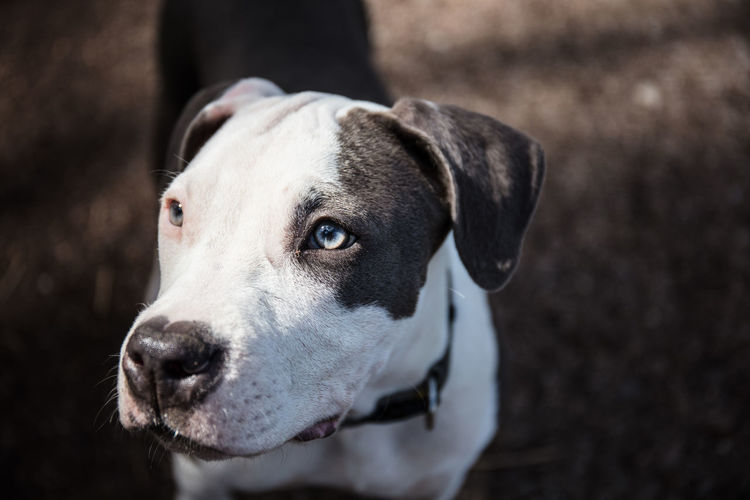 Close-Up Of Dog Looking Away While Standing Outdoors