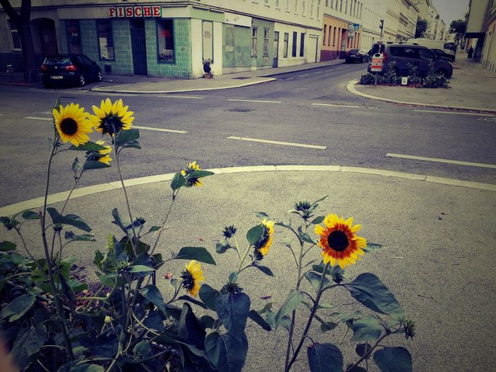 last week in Vienna😍😍😍 Memories ❤ Simple Beauty Beauty In Nature Simple Photography For My Friends 😍😘🎁 My Second Home Happy Moment♥ Lucky Me🦄 Thankful🦄 In Motion, The Way Forward Love Is The Answer Life Is Motion Mood Captures Streetphotography Love It ❤ Vienna From My View🤗 My Love❤ For You.... My Love Flower Head Flower City Yellow Plant