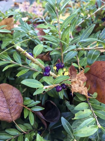 Food for birds? Beauty In Nature Berries Close-up Day Flower Freshness Growth Insect Leaf Nature No People Outdoors Plant