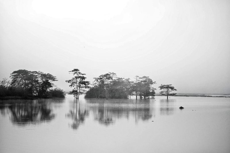"Perspectives On Nature ""Bukidnon Lake"" Water Reflection Tree Lake Tranquility Tranquil Scene No People Nature Beauty In Nature Outdoors Scenics EyeEm Best Shots EyeemPhilippines Maramag Bukidnon Bnw_collection Blaxkandwhite Nikon Be. Ready. Black And White Friday EyeEm Ready"