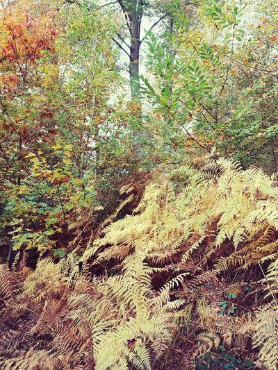 Promenade Bois De La Houssiere Nature Arbres Novembre Automne🍁🍂🍃 Automne Automne Color Bois De La Houssiere Brainelecomte Braine Le Comte