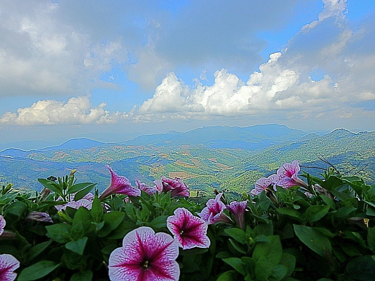 flower, flowering plant, cloud - sky, plant, beauty in nature, sky, growth, freshness, nature, vulnerability, fragility, day, pink color, no people, petal, leaf, plant part, tranquility, inflorescence, flower head